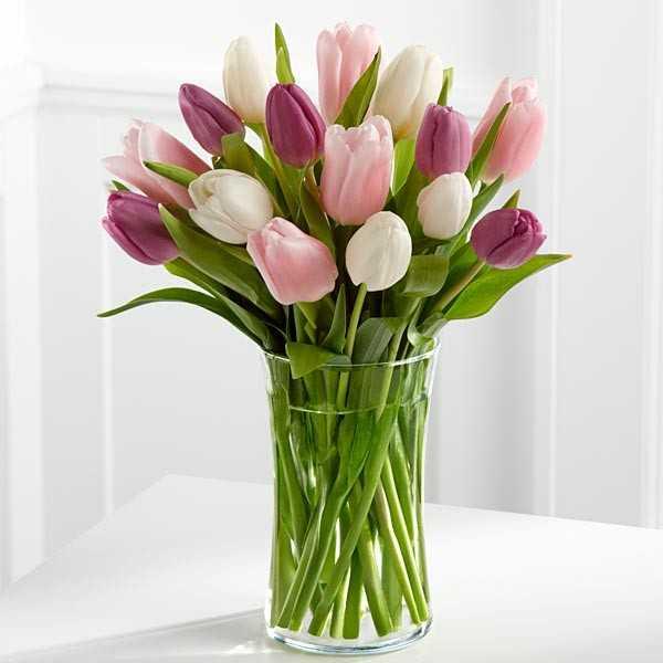 Hoa tulip, loài hoa mang thông điệp tình yêu ngọt ngào