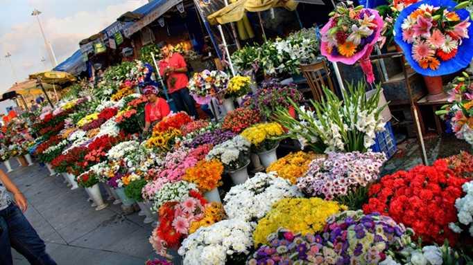 Ghé thăm chợ hoa